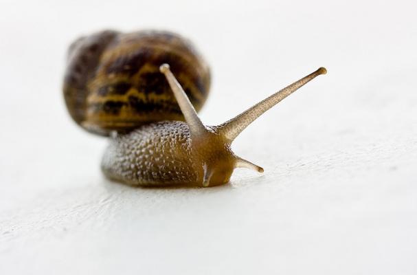 Snail Parasite >> Foodista   Man Seriously Sick After Eating Garden Snails