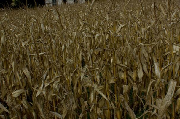 Corn Husker State