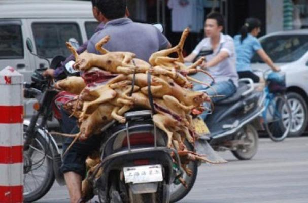 Foodista Week Long Dog Meat Food Festival In China Uses