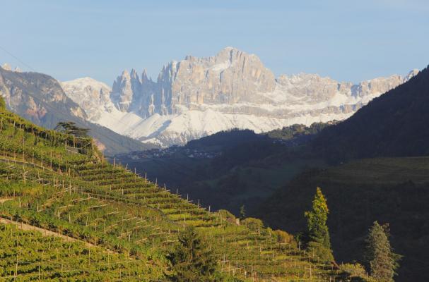 red wines alto adige