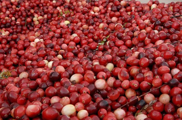 Cranberries (like at the Warrens, WI CranFest!)
