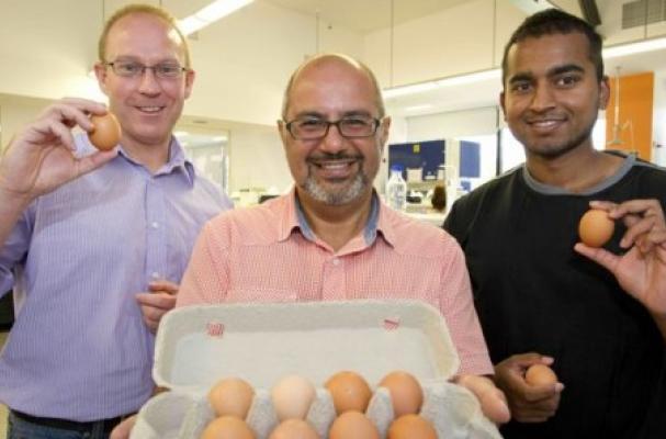 Hypoallergenic Eggs