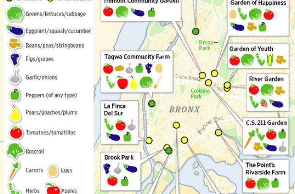 bronx farms