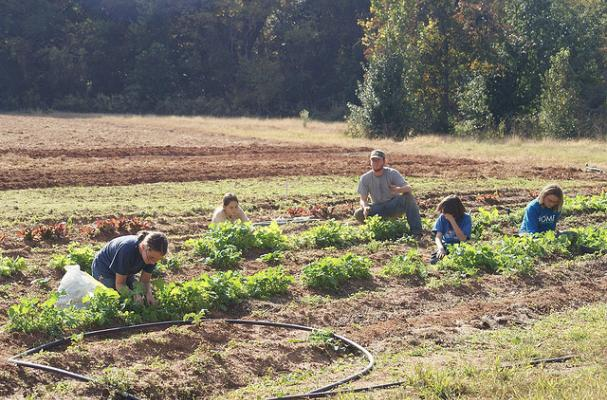 kids farming