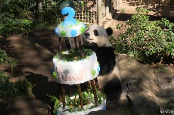 Cool Foodista San Diego Zoo Panda Yun Zi Celebrates Second Birthday Funny Birthday Cards Online Elaedamsfinfo