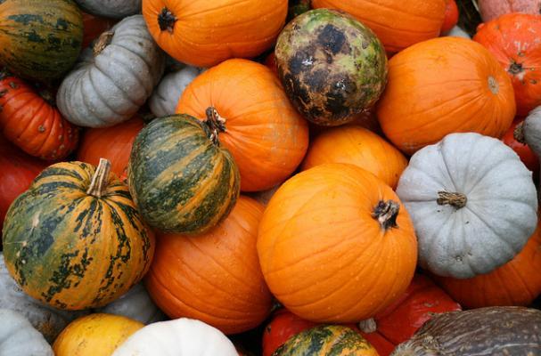 fall's finest pumpkins