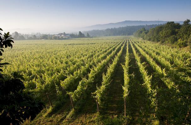 vinho verde portuguese white wine