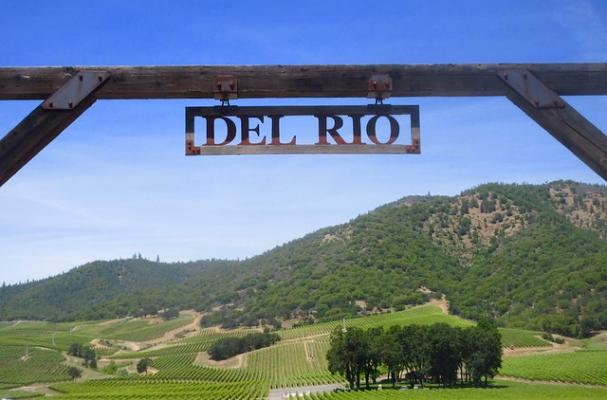Del Rio Vineyards Oregon