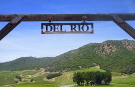 Del Rio Vineyards Oregon
