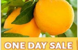 Whole Food Oranges